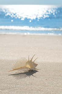 波打ち際の砂浜とホネ貝の写真素材 [FYI01601552]