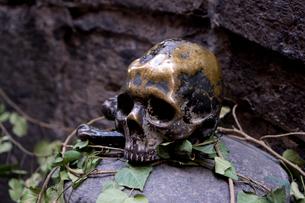 ブロンズの骸骨の写真素材 [FYI01601558]