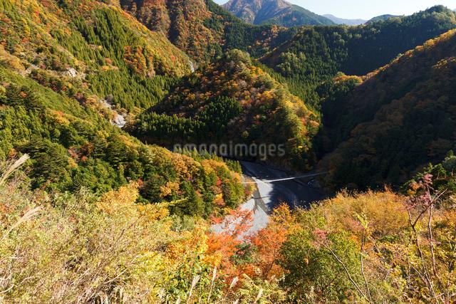紅葉の寸又峡の写真素材 [FYI01601609]