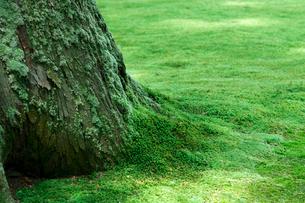 杉の木と苔の写真素材 [FYI01601646]