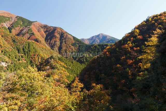 紅葉の寸又峡の写真素材 [FYI01601659]