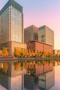 黄葉の街路樹と丸の内ビル群の夕景の写真素材 [FYI01601728]