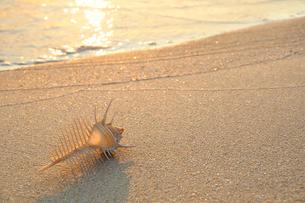 夕焼けの波打ち際 砂浜とホネ貝の写真素材 [FYI01601747]