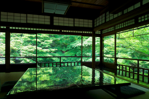 新緑の瑠璃光院の写真素材 [FYI01601809]