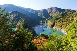 紅葉の接岨湖と鉄橋の写真素材 [FYI01601853]