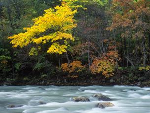 紅葉と川の写真素材 [FYI01601926]