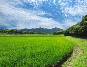 夏の田園風景の写真素材 [FYI01602087]