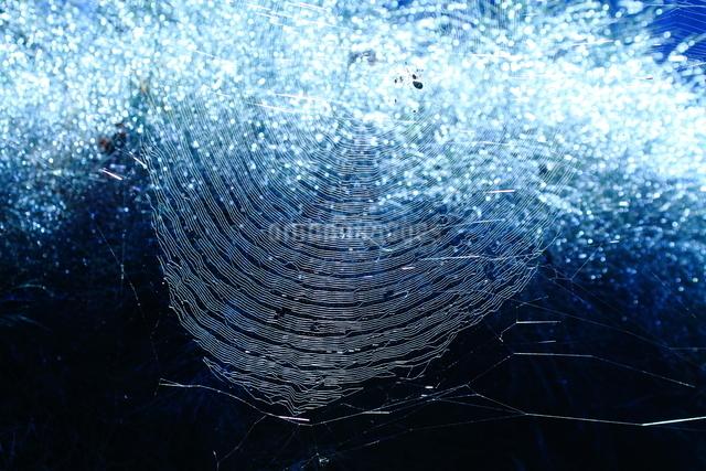 蜘蛛の巣の写真素材 [FYI01602254]