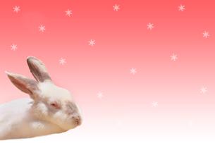 ウサギと星の写真素材 [FYI01602445]