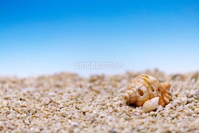 貝の夏イメージの写真素材 [FYI01602880]