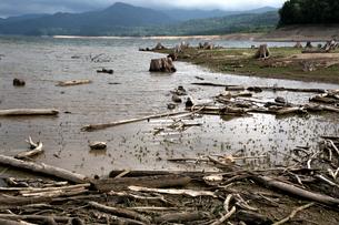 糠平湖湖底の写真素材 [FYI01603000]