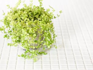 観葉植物の写真素材 [FYI01603056]
