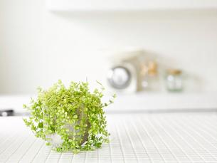 観葉植物の写真素材 [FYI01603104]