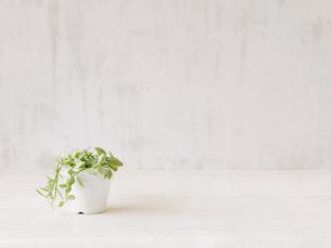 観葉植物の写真素材 [FYI01603111]