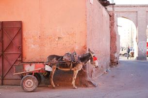 モロッコ マラケシュの旧市街 の写真素材 [FYI01603155]