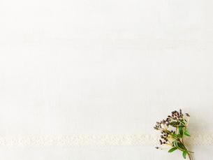 木の実とリボンの写真素材 [FYI01603204]