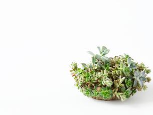 多肉植物のリースの写真素材 [FYI01603216]