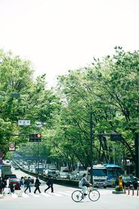 新緑の表参道の写真素材 [FYI01603230]