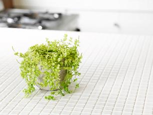 観葉植物の写真素材 [FYI01603263]