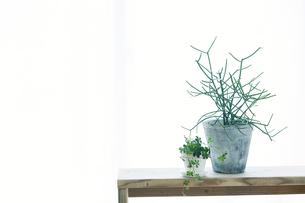 窓辺に置いたベンチと観葉植物とカーテンの写真素材 [FYI01603288]