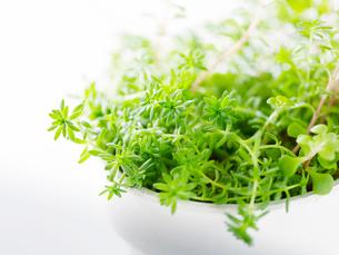 観葉植物と白い植木鉢の写真素材 [FYI01603328]