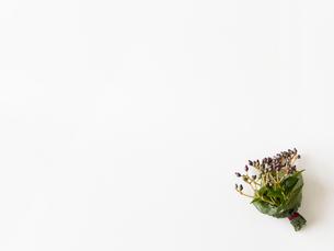 木の実の花束の写真素材 [FYI01603364]