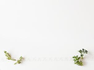 多肉植物とリボンの写真素材 [FYI01603369]