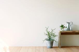 観葉植物とベンチとジョウロの写真素材 [FYI01603384]