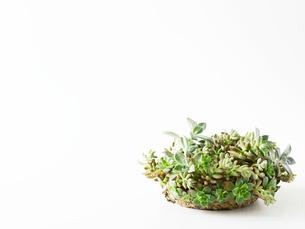 多肉植物のリースの写真素材 [FYI01603400]