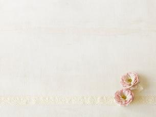 バラとリボンの写真素材 [FYI01603428]