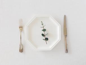 白い皿とナイフとフォークとユーカリの写真素材 [FYI01603542]