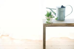 窓辺に置いたベンチと観葉植物とジョウロとカーテンの写真素材 [FYI01603573]
