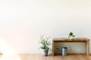 観葉植物とベンチとジョウロの写真素材 [FYI01603599]