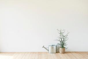 観葉植物とジョウロの写真素材 [FYI01603606]