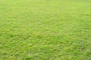 芝生の写真素材 [FYI01603696]