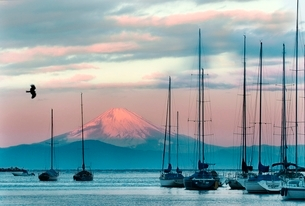 諸磯から相模湾越しに臨む富士の夜明けの写真素材 [FYI01603752]