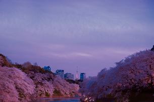 千鳥ヶ淵の桜の写真素材 [FYI01603761]