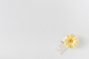 黄色の花とリボンの写真素材 [FYI01603823]
