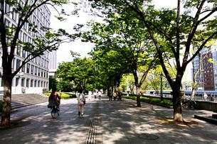 中之島公園の写真素材 [FYI01603890]