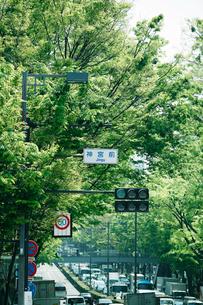 新緑の表参道の写真素材 [FYI01603907]