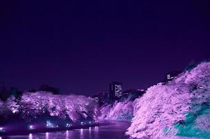 千鳥ヶ淵の桜の写真素材 [FYI01603940]