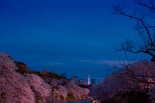 千鳥ヶ淵の桜の写真素材 [FYI01603950]