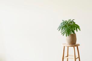 スツールと観葉植物の写真素材 [FYI01604025]