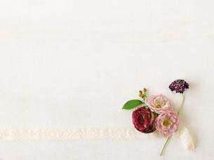バラとリボンの写真素材 [FYI01604089]