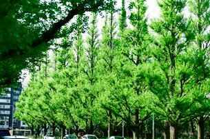 イチョウ並木の写真素材 [FYI01604091]