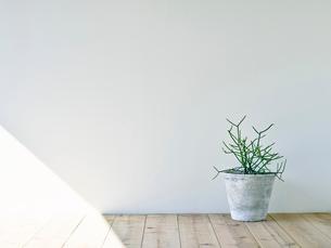部屋に置かれた観葉植物の写真素材 [FYI01604093]