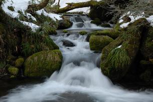 雪融けの奥大山の木谷沢渓流の写真素材 [FYI01604096]