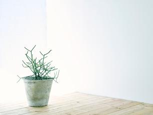 部屋に置かれた観葉植物の写真素材 [FYI01604132]