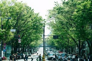 新緑の表参道の写真素材 [FYI01604249]