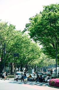 新緑の表参道の写真素材 [FYI01604298]